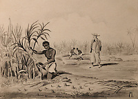Slave working at the sugar cane harvest, with master looking on, sepia wash, c. 1800, in the Musee d'Aquitaine, Cours Pasteur, Bordeaux, Aquitaine, France. Picture by Manuel Cohen