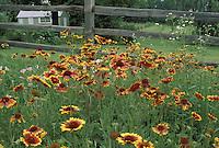 Wildflowers with split rail fence