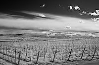 Infrared photograph of a vineyard in the Red Mountain AVA in Benton County, WA.  Fine art photography by Michael Kloth.