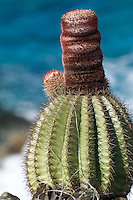 Turkshead cactus on Nanny Point St. John<br />