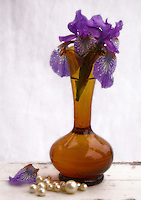 Vase of purple bearded irises on a painted shelf