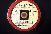 alexander Fleming - plate