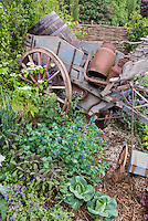 Rustic old farm tools, ornaments,wall, charming old fashioned feel to the garden mixed with vegetables, flowers, iris, Digitalis, Cerinthe major purpurascens, Viburnum shrubs, Heuchera in flower, lettuce, herbs, vines, wagon wheel, spring