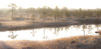 Morning Light and Reflecting Trees in Misty Männikjärve Bog, Fall, Endla Nature Reseve, Jõgeva County, Estonia