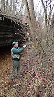 NWA Democrat-Gazette/FLIP PUTTHOFF<br /> Joe Neal looks at vegetation Dec. 1, 2015 along Tanyard Creek Nature Trail.