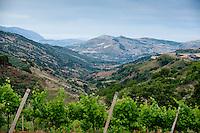 Baglio di Pianetto vineyard, Sicily, Italy