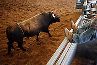Dubbo Rodeo. Dubbo, Australia.<br /> Rodeo is an integral part of rural Australian lifestyle and competitors travel great distances to compete on the circuit. The Australian Rodeo consists of many events some of which are junior and ladies' (open) barrel race, saddle bronc riding, bull riding, bareback bronc riding, rope and tie, steer wrestling, team roping and the steer ride. Males, females and kids are all involved in the Australian rodeo circuit.<br /> Pictures James Horan