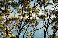 Looking towards sea through native coastal bush near Totaranui beach on Abel Tasman Coast Track, Abel Tasman National Park, Nelson Region, South Island, New Zealand