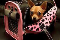 Leo the dog sits in a pet carrier lined with pink leopard faux fur.