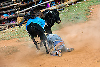 A young bullfighter falls down after being attacked by a wild bull during the Yawar Fiesta, a ritual fight between the condor and the bull, held in the mountains of Apurímac, Cotabambas, Peru, 30 July 2012. The Yawar Fiesta (Feast of Blood), an indigenous tradition which dates back to the time of the conquest, consists basically of an extraordinary bullfight in which three protagonists take part - a wild condor, a wild bull and brave young men of the neighboring communities. The captured condor, a sacred bird venerated by the Indians, is tied in the back of the bull which is carefully selected for its strength and pugnacity. A condor symbolizes the native inhabitants of the Andes, while a bull symbolically represents the Spanish invaders. Young boys, chasing the fighting animals, wish to show their courage in front of the community. However, the Indians usually do not allow the animals to fight for a long time because death or harm of the condor is interpreted as a sign of misfortune to the community.