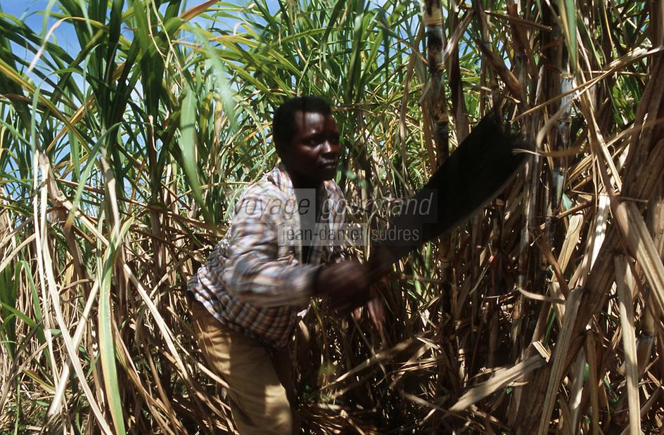 Cuba/Env La Havane: Coupeur de canne à sucre à la Guanabito Farm dans un champ de canne à sucre