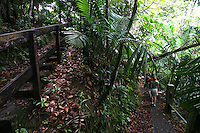6/28/08------ Visitors walk along a hiking path in the Rain Forest of the Caribbean, El Yunque, in Rio Grande, Puerto Rico..Photo by Angel Valentin, copyright 2009.