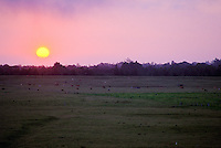 Sunset landscape in Waimea, North Kohala, Big island of Hawaii