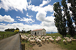 A rural sheep station on the South Island of New Zealand.