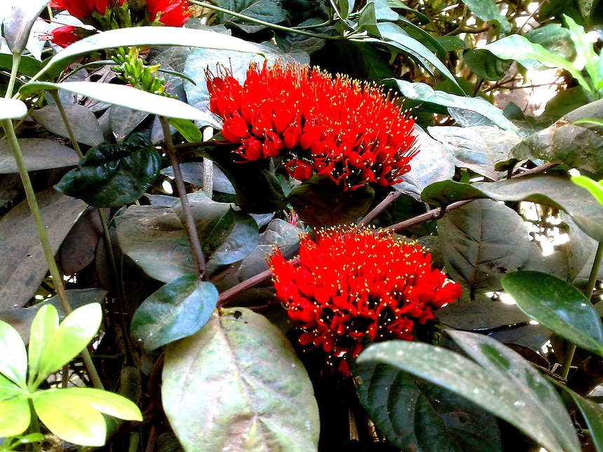 red blossoms in tropical garden