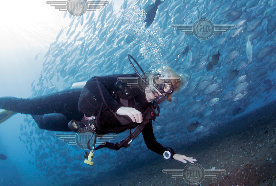 A diver in front of a school of jackfish next to USAT Liberty, a United States Army transport ship torpedoed by a Japanese submarine January 1942. Coral growth and marine life has made Liberty's wreck a popular dive site..