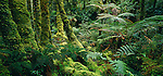 Mossy bush & ferns in Breaksea Sound. Fiordland National Park. New Zealand.
