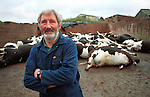 Farmer  Chris  Baldwin  near Chulmleigh, Devon has been culled under the contiguous cull policy...His  herd of British  Freisans  were culled  against  his  will last  Tuesday and he managed to  stop the  MAFF slaughter  teams  half  way through leaving  18 oif  his  herd alive.   IN a recent  hight  ct pullout MAFF haveleft  him with half  his herd  alive and the  other culled  half as  decomposing animals in a  cattle  crush.