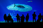 The Monterey Aquarium in Monterey CA, Monday Jan 25, 2010.Photo Brian Baer