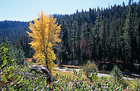 &quot;Truckee River in Autumn&quot;- Photographed between Alpine Meadows and Tahoe City, along the Truckee River, facing southeast.<br />