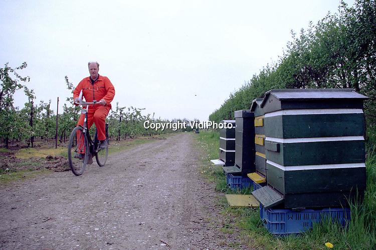 Foto: VidiPhoto..OOSTERHOUT - De eigenaar van deze appelboomgaard in het Gelderse Oosterhout heeft geluk. Hij heeft op tijd een flink aantal bijenvolken kunnen regelen om zijn bloesem te bestuiven. Maar voor het tweede achtereenvolgende jaar zijn er te weinig bijenvolken. Imkers kunnen de vraag van fruittelers niet aan. Vooral in de Bommelerwaard en Zeeland is er sprake van een tekort aan bijeenvolken. Een van de belangrijkste oorzaken is dat oudere imkers stoppen met het houden van bijen, terwijl de instroom van jonge en beginnende imkers afneemt..