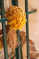 A bouquet of dried yellow flowers hanging in a window. Collioure. Roussillon. Window. France. Europe.
