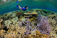 QZ0765-D. Woman (model released) snorkels over hard and soft corals on a healthy coral reef in the Great Barrier Reef Marine Park. Australia, Great Barrier Reef, Pacific Ocean.<br /> Photo Copyright &copy; Brandon Cole. All rights reserved worldwide.  www.brandoncole.com