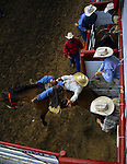 A bareback rider stays on top while leaving the chute during the St. Paul Rodeo.