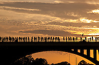 Austin Congress Avenue Bridge Bats - Urban Bat Colony Stock Photo Image Gallery