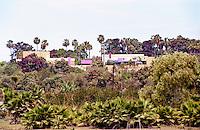 Jenny Armit's Mexico