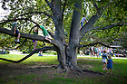 """August 20, 2012; Children climb a tree on the Main Building Quad before the performance of the Shakespeare play, """"A Midsummer Night's Dream."""" Photo by Barbara Johnston/University of Notre Dame"""