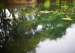 Photo shows a pond inside the grounds of Izumo Taisha shrine in Izumo, Shimane Prefecture, Japan. . Photographer: Robert Gilhooly