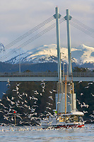 Commercail fishing troller in Sitka Harbor, O'connell bridge, Sitka, Alaska