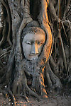 Buddha head embedded in the roots at Wat Phra Mahathat, Ayutthaya, Thailand, 2004