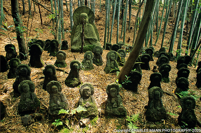 A bamboo grove is the setting for a large Buddha image and his cadre of small stone attendants at the Sekihoji Temple shrine on the outskirts of Kyoto.