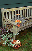 Garden Bench, Basket of Apples peaches cherries mixed fruit Malus harvest crop, Ball of string twine, licorice plant helichyrsum, charming scene
