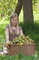 Äpfel, Apfel-Ernte, Apfelernte, Apfel - Ernte, Kultur-Apfel, Apfelbaum, Apfel - Baum, Mädchen hat reife Äpfel in einem Korb gesammelt, Malus domestica, Apple, Pommier commun