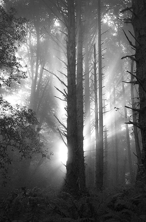 Coast Redwoods, Matt Davis Trail