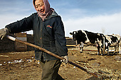Ma Xia, 50, carries cow dung at her farm in a village 40km outside Manzhouli on the China-Russia border. While urban Chinese population is getting rich, much of rural China remains extremely poor.