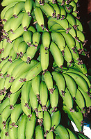 Bananas on North Shore, Hawaii..photo:  joliphotos.com