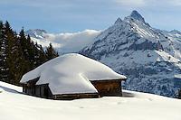 Swiss chalet on the Busalp tobogan slopes - near Grindelwald - Swiss Alps - Switzerland