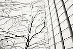 Trees/Plants/Flowers