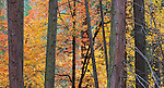 Autumn forest, Yosemite Valley, Yosemite National Park, California  2009