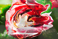 fluid shape in other fluid shapes in a composition with red and white colors. Abstract non objective photography, colors of the nature, fine art photography, modern art. Bruno Paolo benedetti. Printed size 4x6 inches on metal