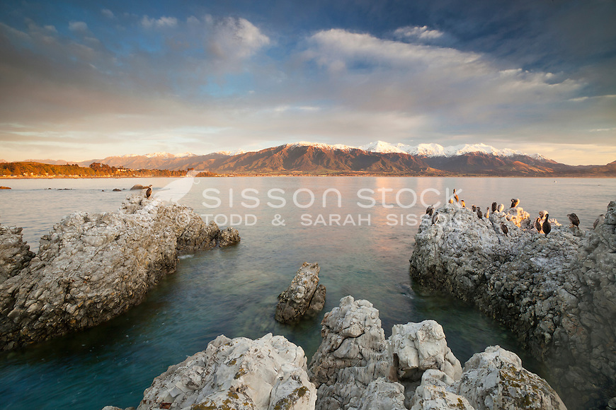 Shags on a rock at sunrise with the Kaikouras in the background, South Island NZ