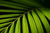 Photo macro d'une palme