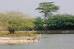 Bird life, Bishnoi Guda