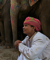 Elephants at the Jaipur Amber Fort,