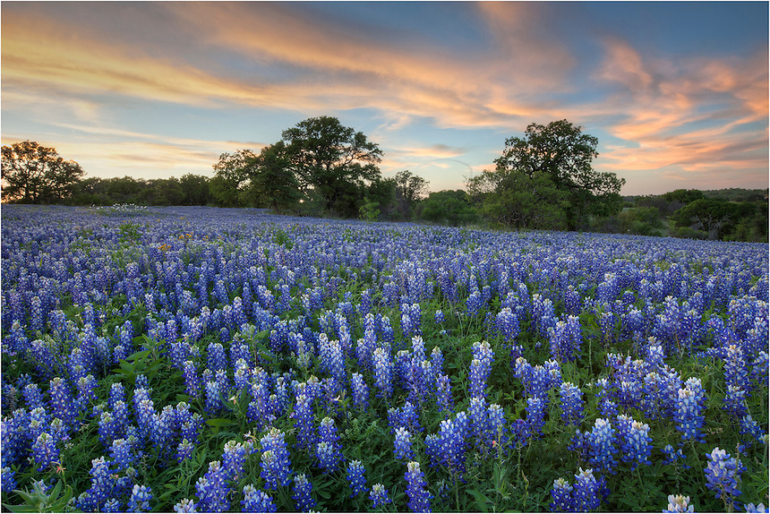 It was a perfect evening in San Saba County on this evening. I was surrounded by bluebonnets and engulfed by the aromas of Texas Wildflowers.