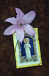 Pale pink flower of Clematis Hagley hybrid lying on scuffed leather with soiled picture of infant Jesus or holy child